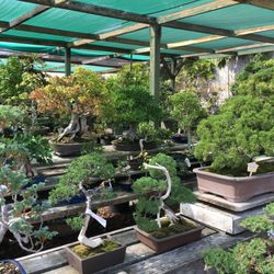 Yamaguchi Bonsai Nursery 121 Photos 58 Reviews Nurseries