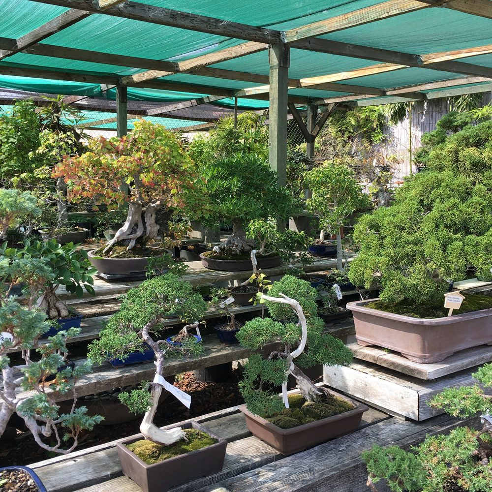 Photos For Yamaguchi Bonsai Nursery Yelp