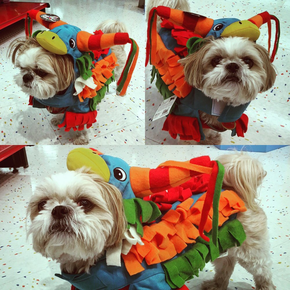 mocha coconut trying the pinata costume on! they have more halloween