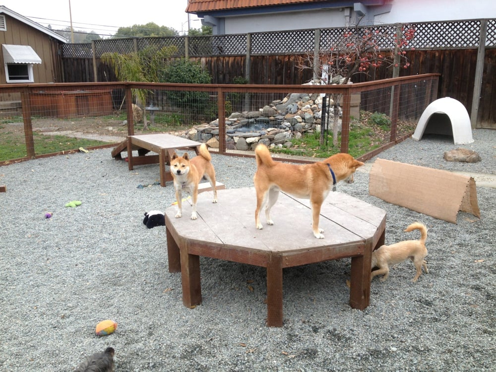 On the play structures in small dog play area - Yelp