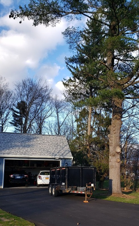 All American Tree Service: Duanesburg, NY