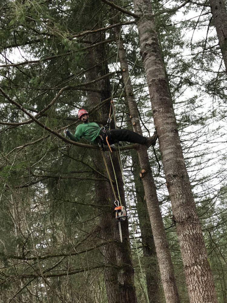 Arbor Science tree Service: Battle Ground, WA