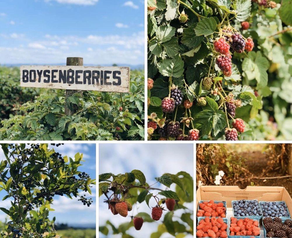 Heikes Berry Farm & Fresh Market: 9400 SW Heikes Dr, Hillsboro, OR