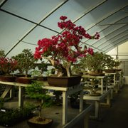 Photo Of New England Bonsai Gardens Bellingham Ma United States Part