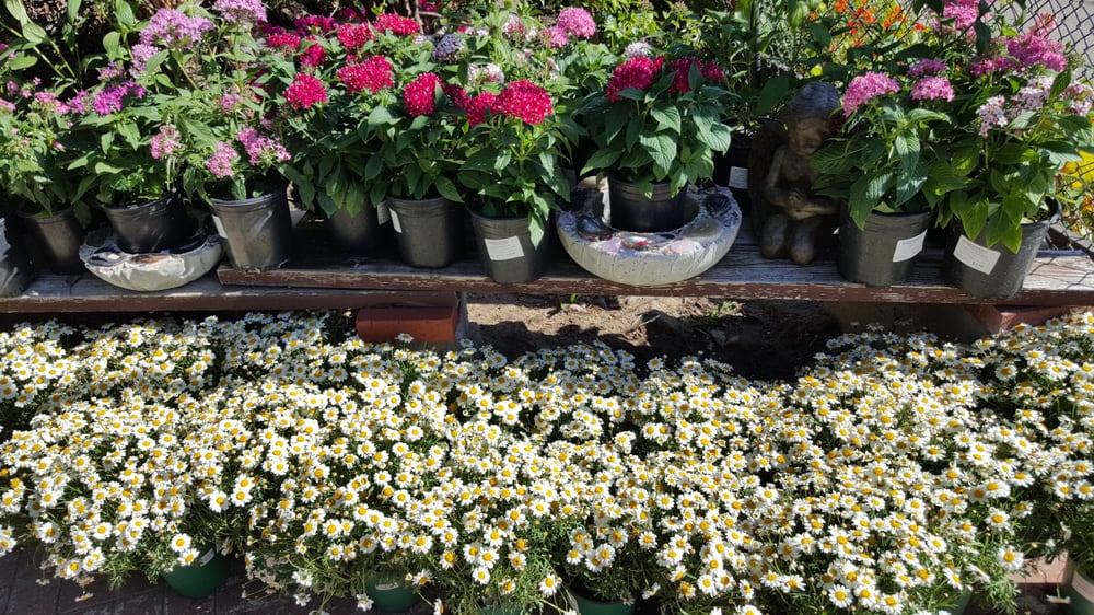 Photo Of El Plantio Nursery Escondido Ca United States Spring Colors At