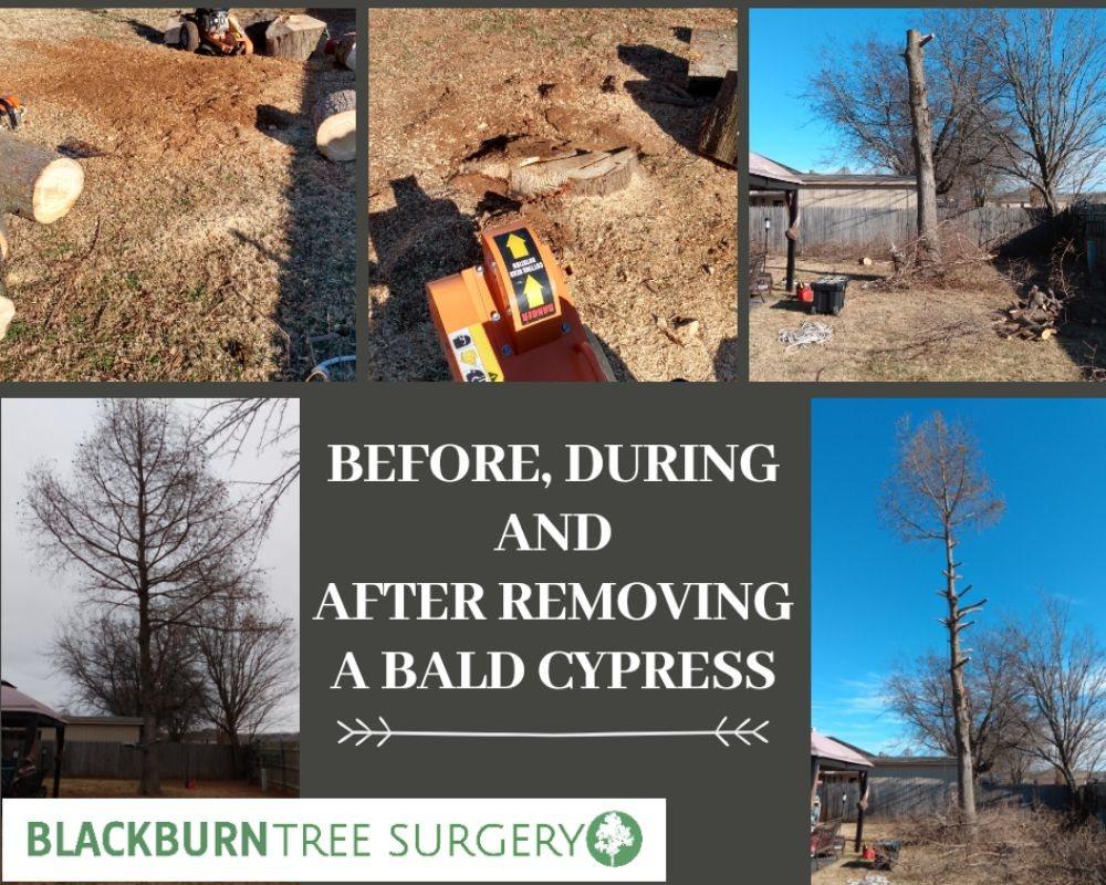 Blackburn Tree surgery: Lexington, OK