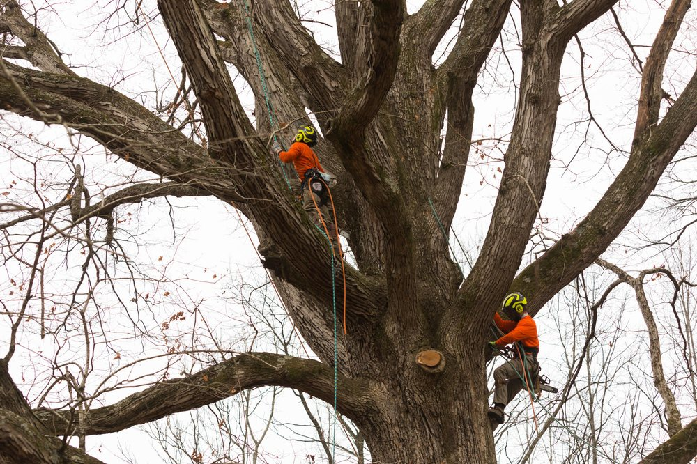 Epperson Tree Service: Hendersonville, NC