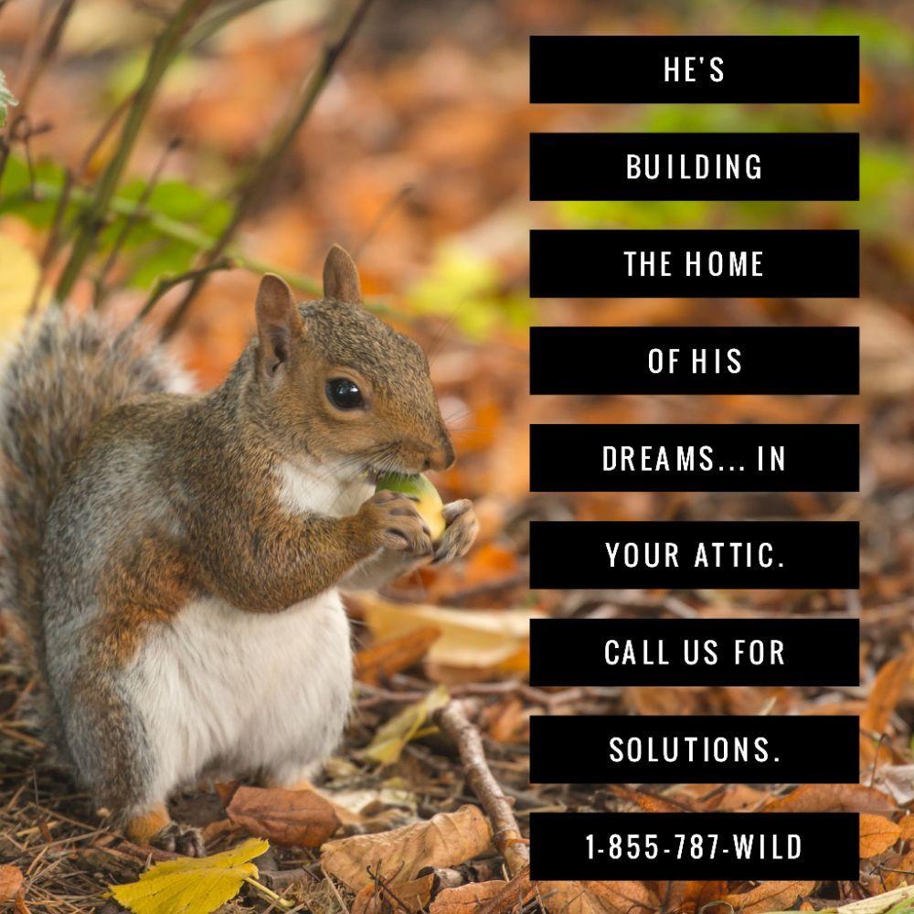 Oklahoma Wildlife Control: 36175 Pinehill Rd, Bristow, OK