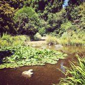 Photo Of San Francisco Botanical Garden   San Francisco, CA, United States.  Asian