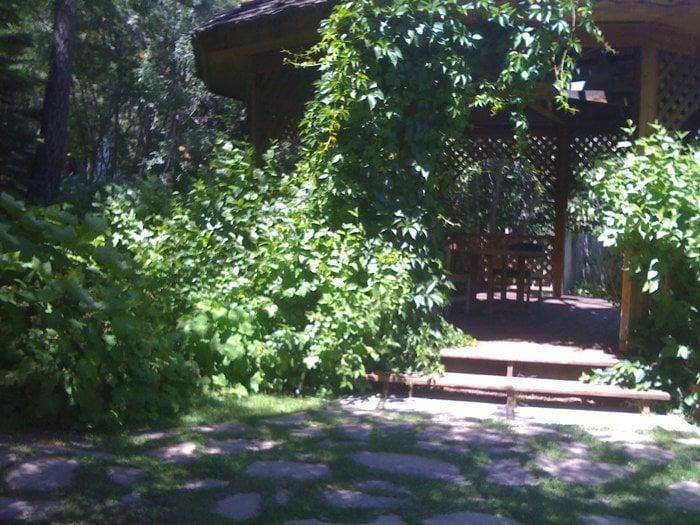 Photos for Tahoe Tree Company - Yelp