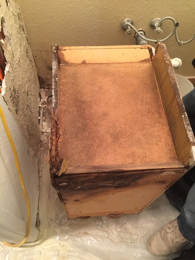 Photo of Pinnacle Home Services - lodi, CA, United States. Mold under Kitchen