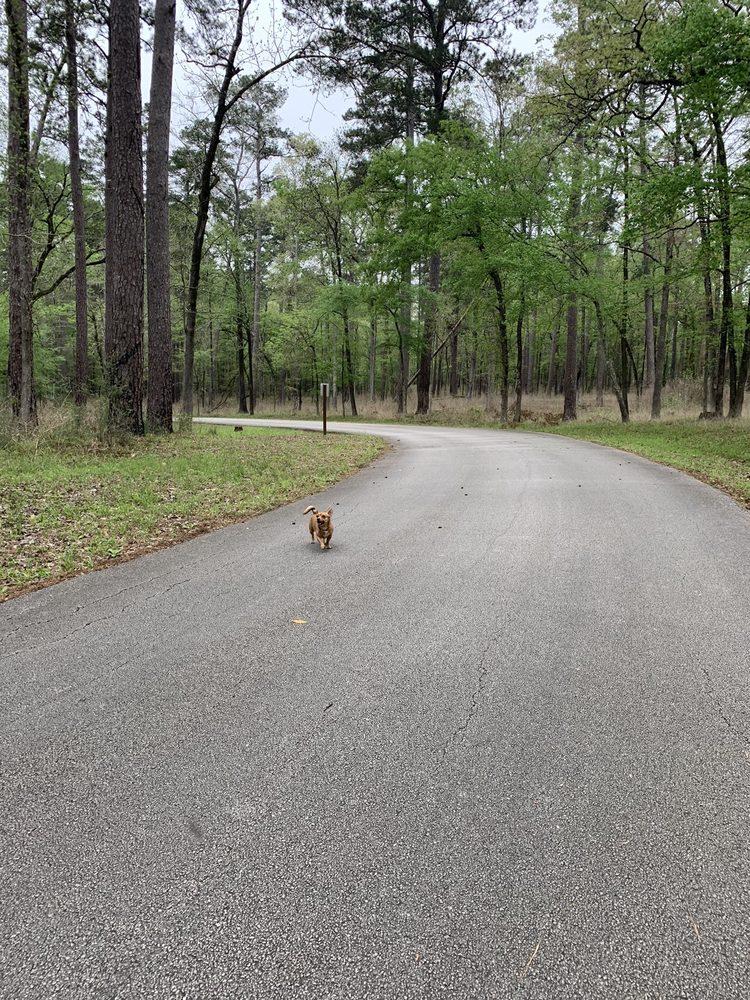 Davy Crockett National Forest: 18551 State Highway 7 E, Kennard, TX
