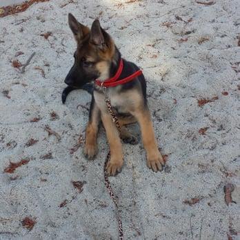 pet minded closed 100 photos 61 reviews dog walkers 16000 gothard st huntington beach. Black Bedroom Furniture Sets. Home Design Ideas