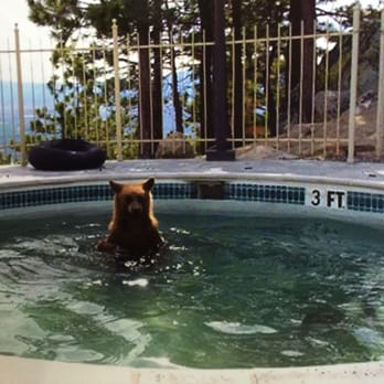Lake Tahoe Resort Hotel 591 Photos 530 Reviews Hotels 4130 Blvd South Ca United States Phone Number Yelp
