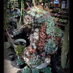 terra sol garden center 52 fotos y 30 reseñas viveros y