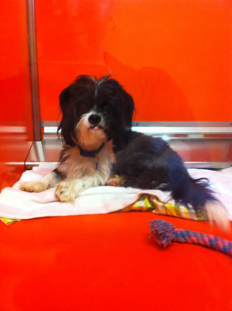 Great Plains SPCA - Animal Shelters - 9800 W 67th St ...