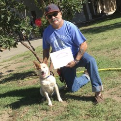 Hollywood Dog Obedience Club - 35 Photos & 24 Reviews - Pet