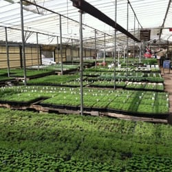 Photo Of Young Garden Mart   Warren, MI, United States