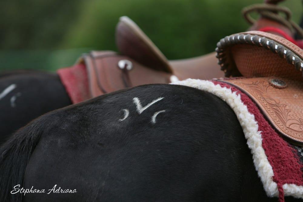 Montana Horses Inc: 9700 Clarkston Rd, Three Forks, MT