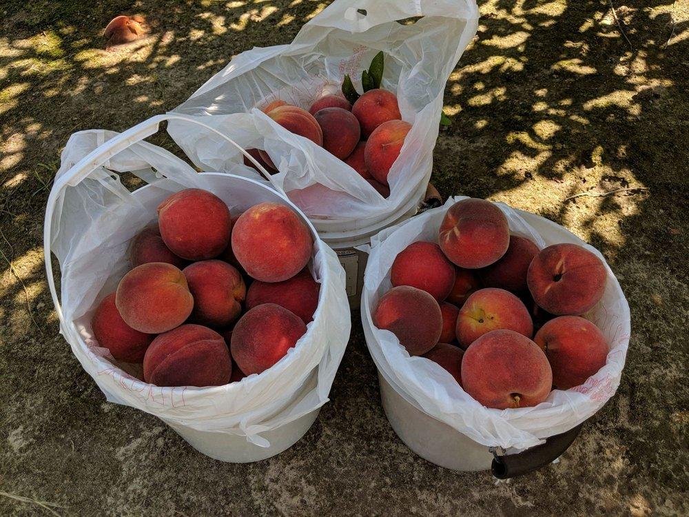 Ridgeville Peaches: 582 US-78, Ridgeville, SC