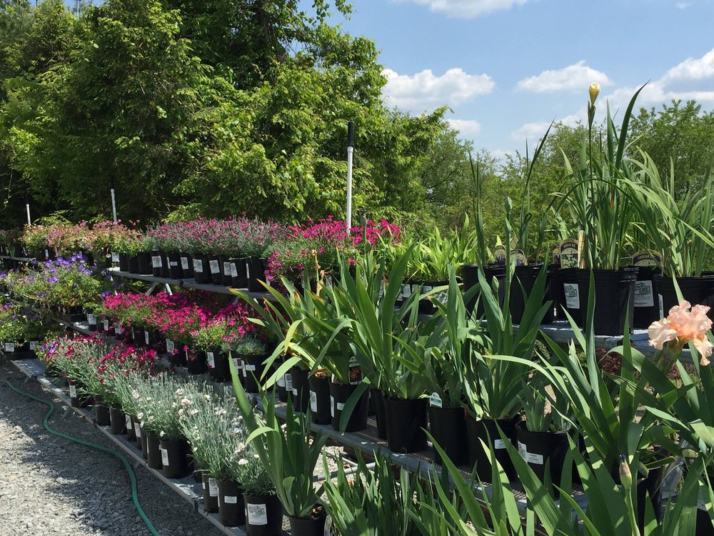 Photo Of Plumline Nursery Murrysville Pa United States Thousands Perennials To