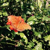 Genial Photo Of Butterfly Farms   Encinitas, CA, United States. Beautiful And  Serine Time