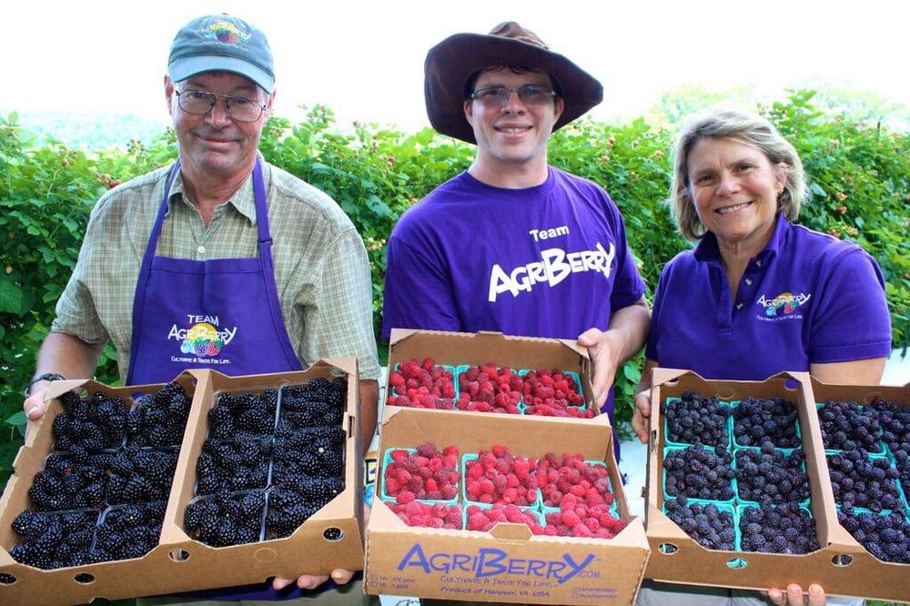 Agriberry CSA Farm: 6289 River Rd, Hanover, VA