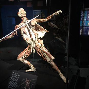 The Health Museum - 103 Photos & 72 Reviews - Museums ...