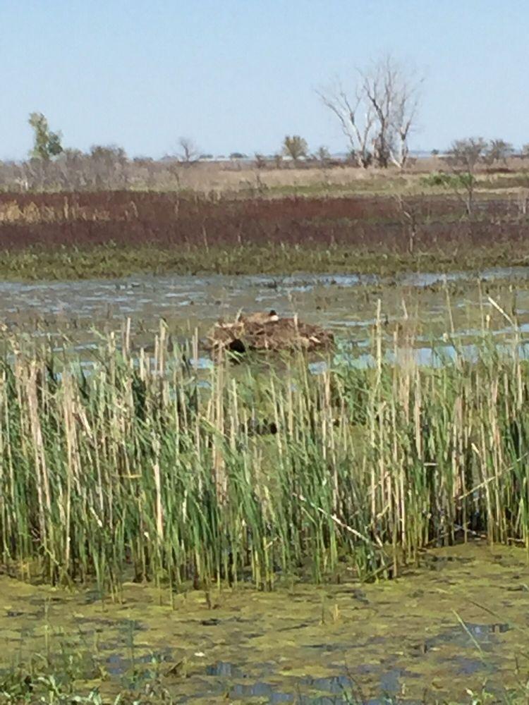 De Soto National Wildlife Refuge: 1434 316th Ln, Missouri Valley, IA