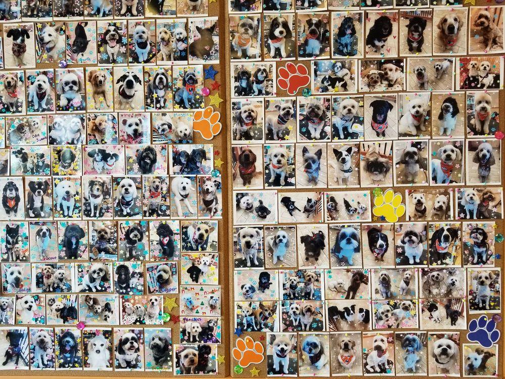 Lovely Pet Spa: 16526 Keystone Blvd, Parker, CO
