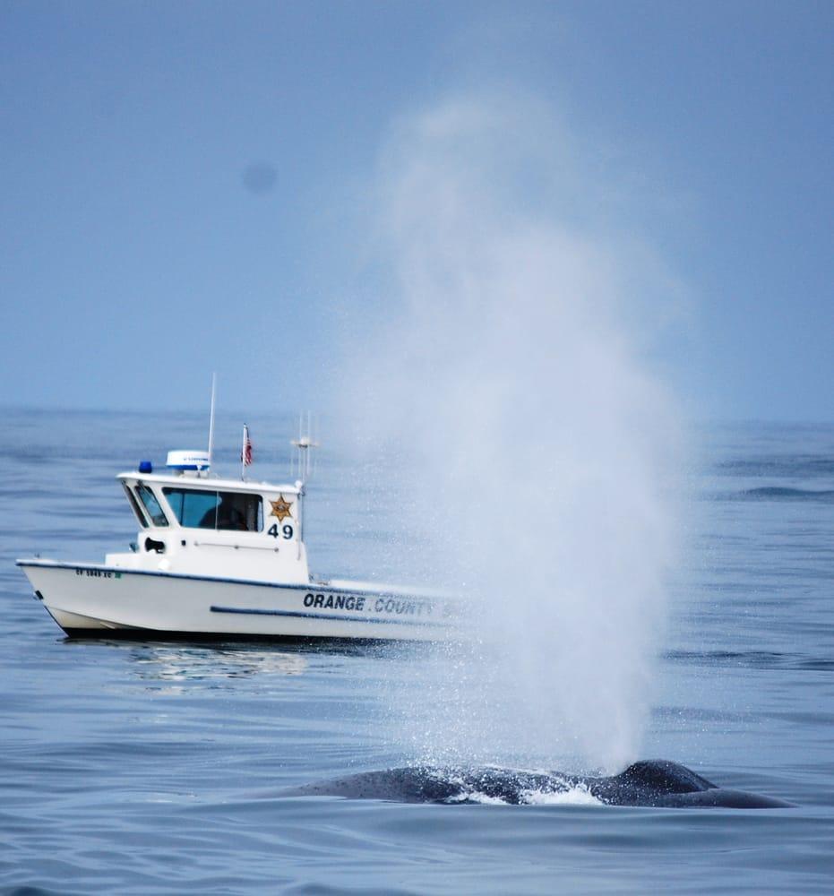 freelance sportfishing ocean tours 38 fotos 32 beitr ge bootfahren 400 main st. Black Bedroom Furniture Sets. Home Design Ideas
