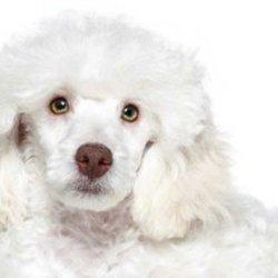 Pet Loss House Calls Get Quote Pet Services San Antonio Tx