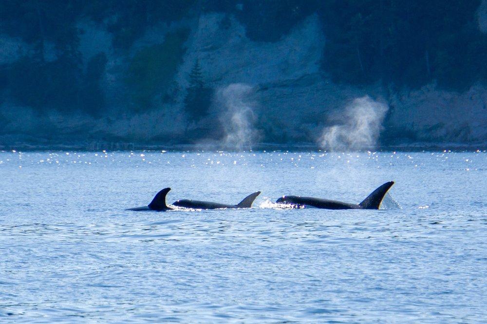 San Juan Safaris - Seattle Orca Whale Watching: 10 Front St, Friday Harbor, WA