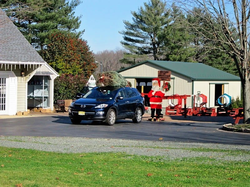 Chesterfield Christmas Trees - Christmas Trees - 193 Crosswicks Chesterfield  Rd, Chesterfield, NJ - Phone Number - Last Updated January 9, 2019 - Yelp - Chesterfield Christmas Trees - Christmas Trees - 193 Crosswicks