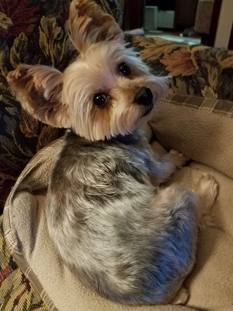 Happy dog groomers: 5733 Buckeystown Pike, Frederick, MD