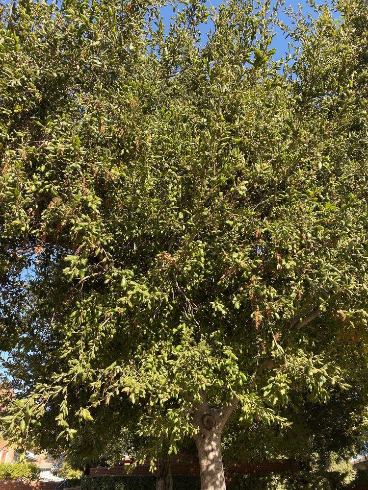 City of Bradbury: 600 Winston Ave, Bradbury, CA