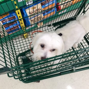 Yelp Reviews for Pet Supplies Plus - 71 Photos & 36 Reviews - (New