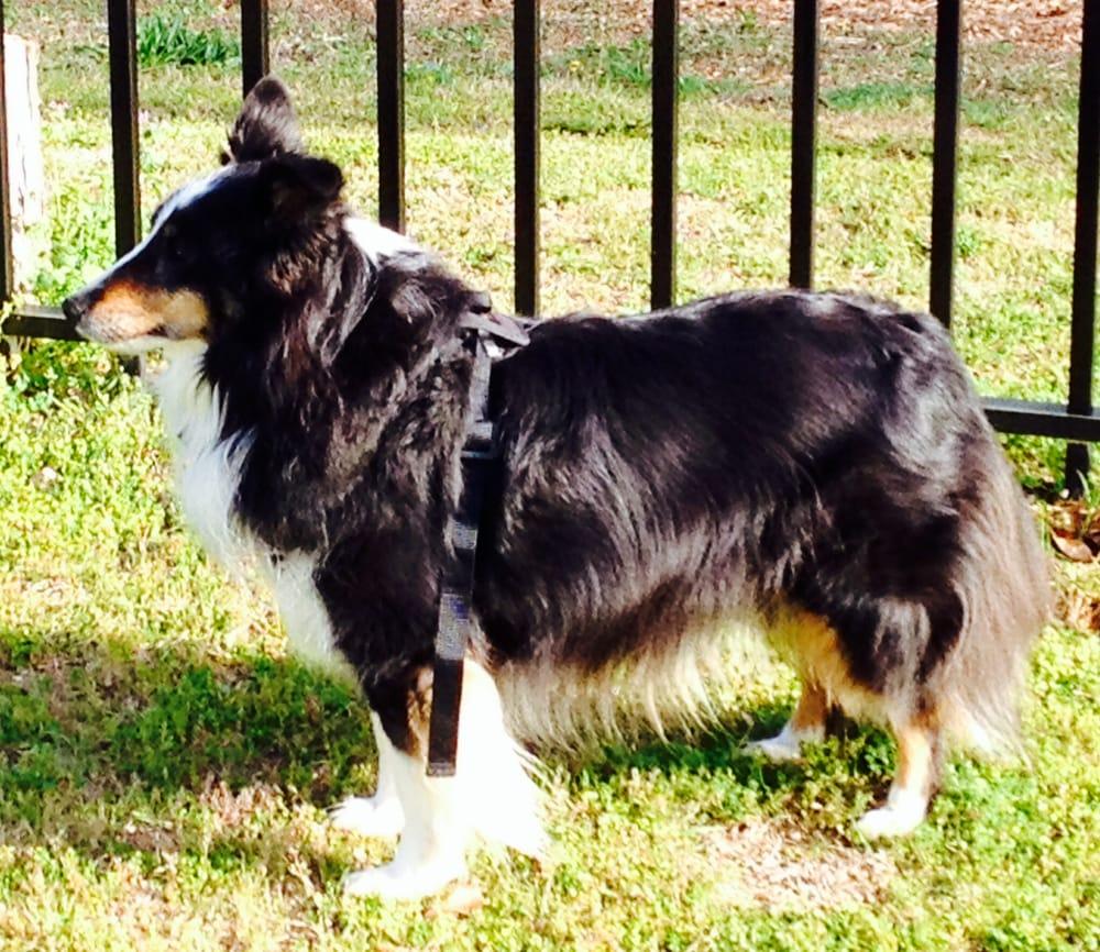 Aiken Dog Park