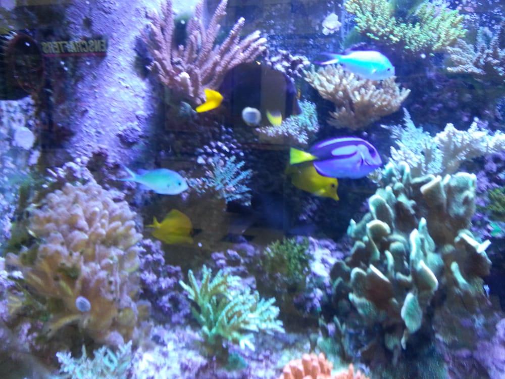 underwater world discount pets   10 photos   pet shops   2