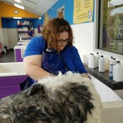 Community bark dog wash groom 26 photos 51 reviews pet photo of community bark dog wash groom milwaukee wi united states solutioingenieria Gallery