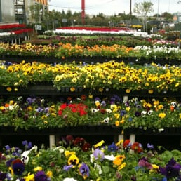 Houston garden center 13 reviews nurseries gardening 525 w grand pkwy s katy tx Houston garden centers houston tx