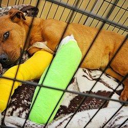 Alberta Animal Rescue Crew Society - Community Service/Non