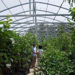 Phuong S Nursery Home Decor Jardinagem E Viveiros