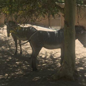 Photo Of LA Zoo Lights