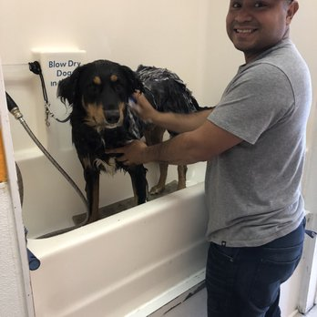 Dippity dog self serve pet wash 48 photos 119 reviews pet photo of dippity dog self serve pet wash oceanside ca united states solutioingenieria Images