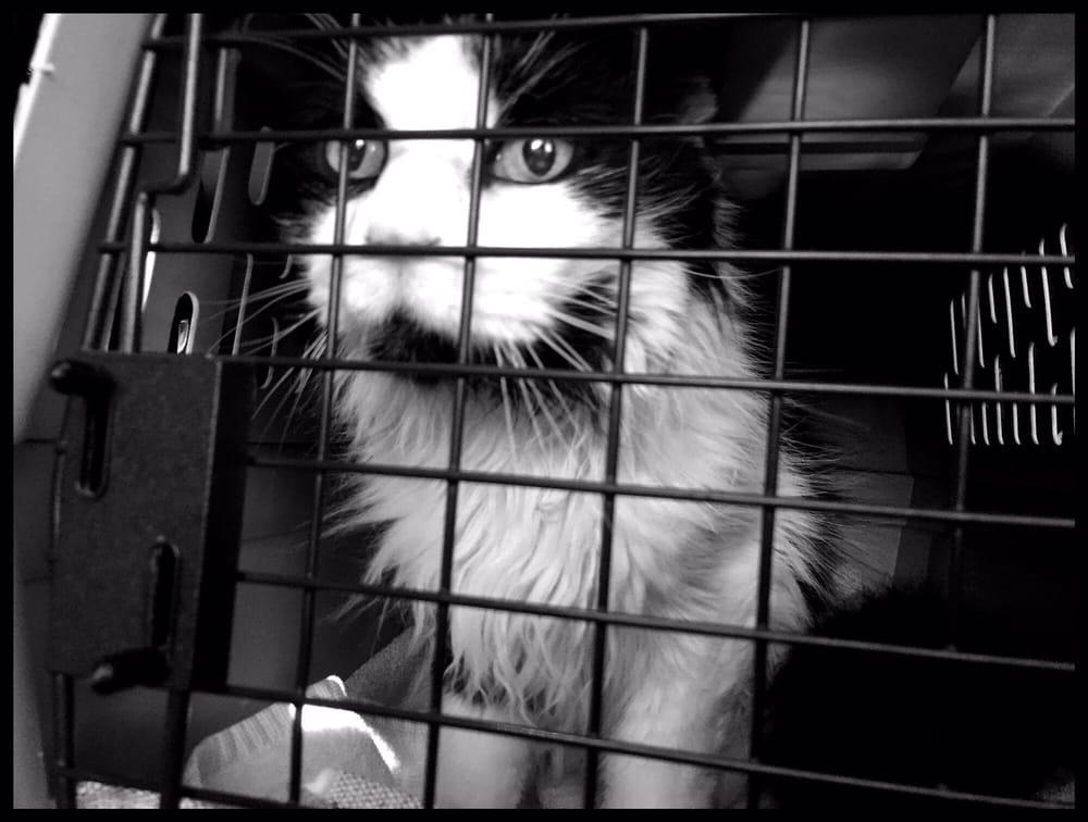 The Pampurred Cat: 1663 N State Hwy Cc, Nixa, MO