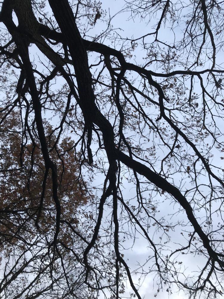 True Vine Tree Care: Lonsdale, MN