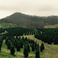 Nc Christmas Tree Farm.Boyd Mountain Christmas Tree Farm Christmas Trees 445 Boyd Farm