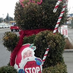 photo of chubby tubby christmas trees seattle wa united states