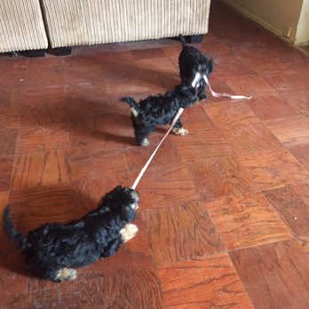 Dog Rescue In Van Nuys Ca